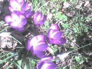 Blütenwolken, überm Boden schwebend