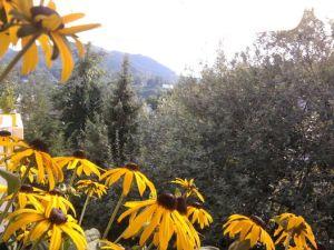 Blick über Blumen in den Wald