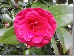Vergänglich: Blüten und Blütenträume